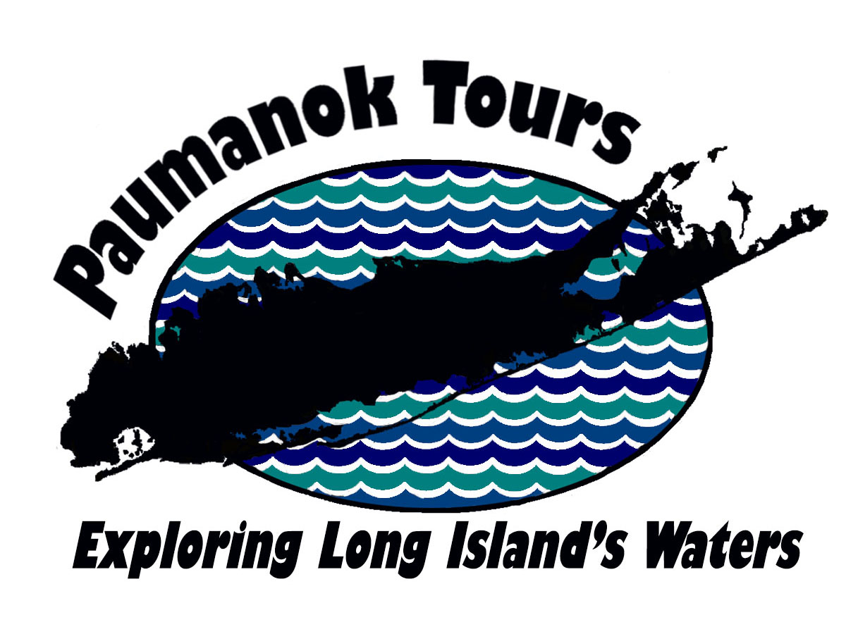 The best in professionally guided kayaking tours across Long Island